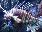 Aquarium_of_the_Pacific_025.jpg
